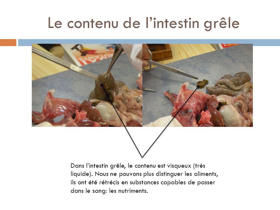 Le contenu du gros intestin Dans le gros intestin, les selles sont formées: l'eau est absorbée, le contenu est sec et il ne reste que ce qui n'a pas été digéré.