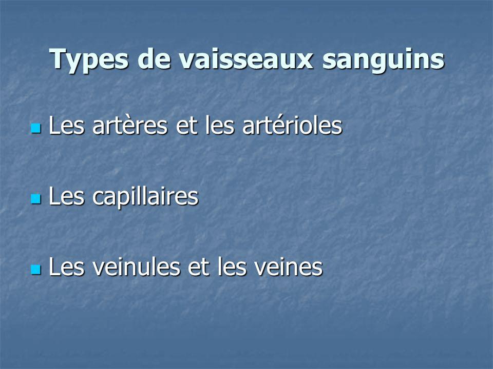 Types de vaisseaux sanguins Les artères et les artérioles Les artères et les artérioles Les capillaires Les capillaires Les veinules et les veines Les