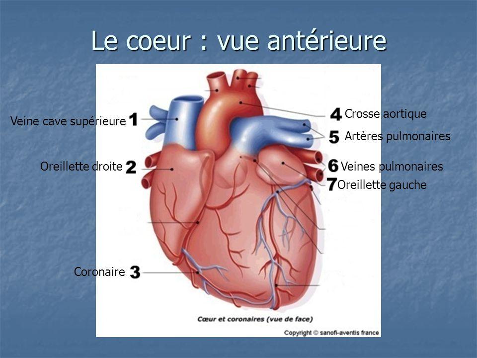 Le coeur : vue antérieure Veine cave supérieure Oreillette droite Coronaire Crosse aortique Artères pulmonaires Veines pulmonaires Oreillette gauche