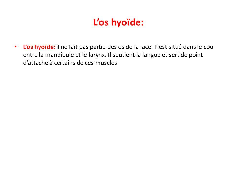 L'os hyoïde: L'os hyoïde: il ne fait pas partie des os de la face.