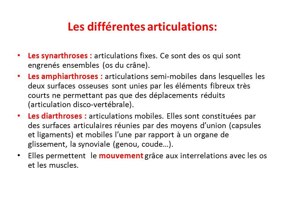 Les différentes articulations: Les synarthroses : articulations fixes.