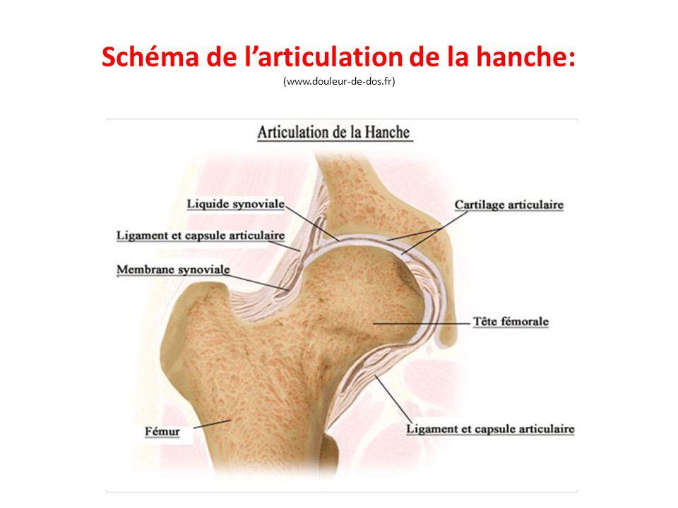 Schéma de l'articulation de la hanche: (www.douleur-de-dos.fr)