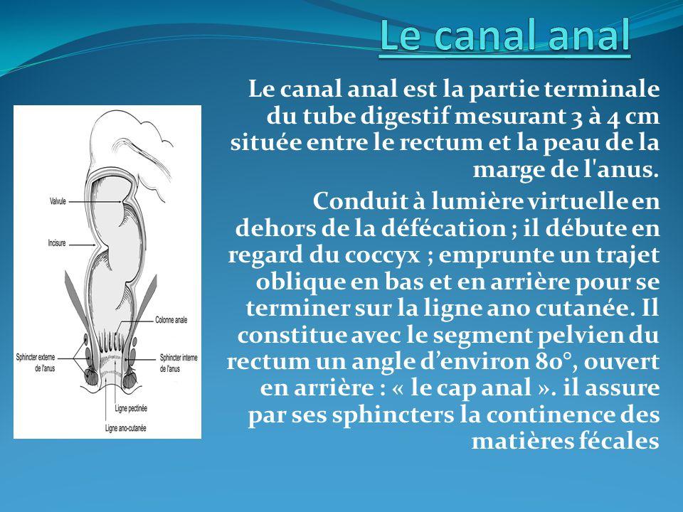 I- Configuration interne : A- La zone endoluminale : - Si è ge au niveau de la moiti é sup é rieure du canal anal.Haute de 1à2cm de couleur rouge sombre (volumineux plexus hémorroïdaires internes sous-muqueux) se poursuit vers le haut par une muqueuse de couleur rose se rapprochant de celle du rectum.