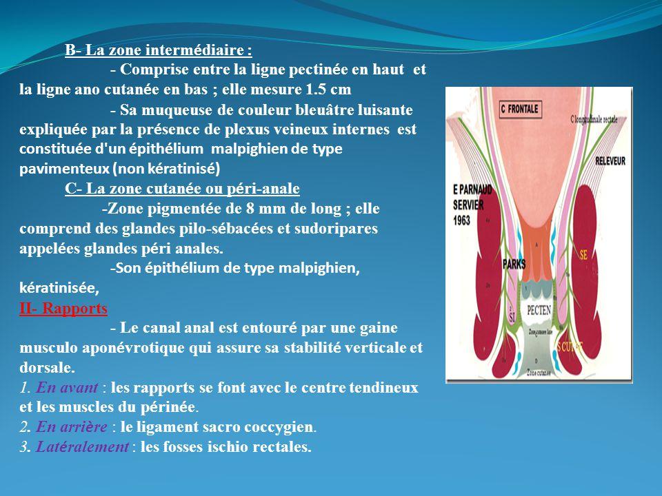 III- L ' appareil sphinct é rien :2 types de sphincters : A- Sphincter interne (muscle lisse) : Correspond à l 'é paississement de la couche musculaire circulaire du rectum et si è ge au niveau des 3 /4 sup é rieurs du canal anal jusqu 'à la ligne ano cutan é e.