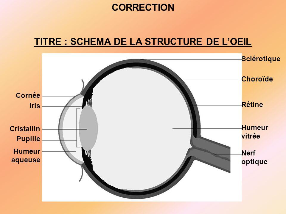 Cornée Iris Cristallin Pupille Humeur aqueuse Sclérotique Choroïde Rétine Humeur vitrée Nerf optique CORRECTION TITRE : SCHEMA DE LA STRUCTURE DE L'OEIL