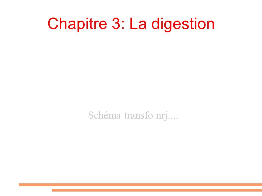 Chapitre 3: La digestion Schéma transfo nrj....