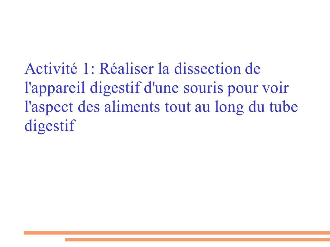 Activité 1: Réaliser la dissection de l'appareil digestif d'une souris pour voir l'aspect des aliments tout au long du tube digestif