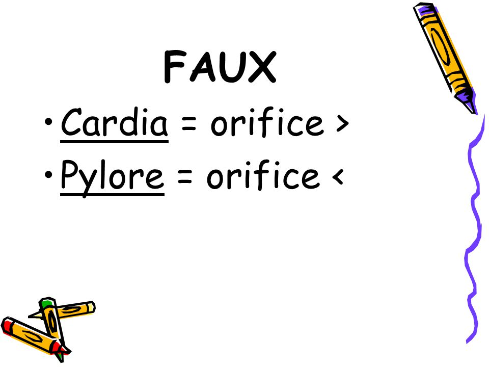 FAUX Cardia = orifice > Pylore = orifice <