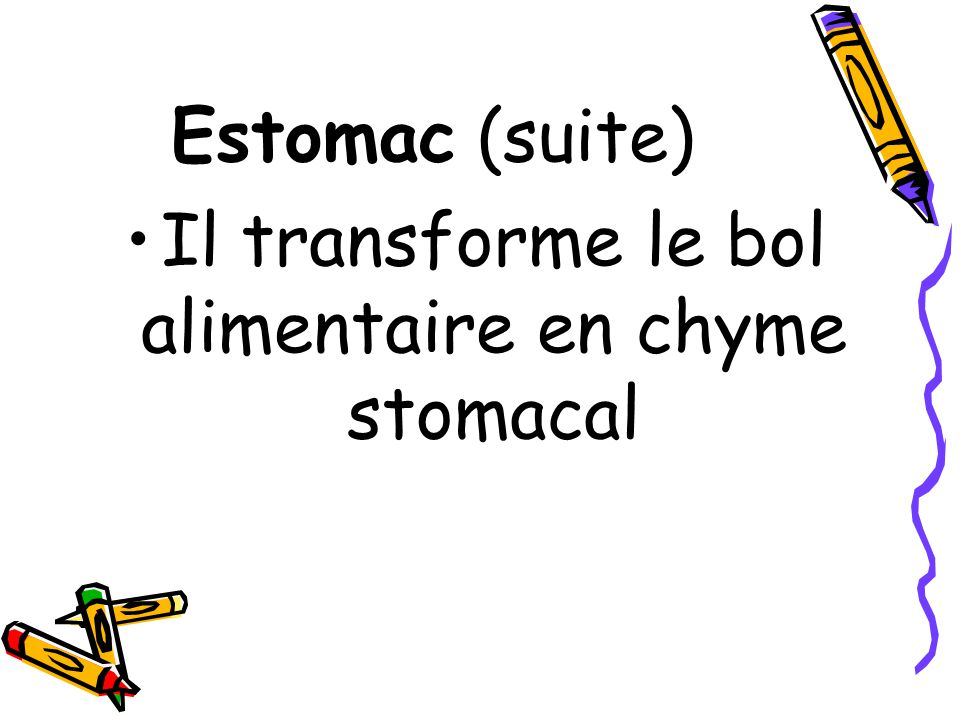 Estomac (suite) Il transforme le bol alimentaire en chyme stomacal