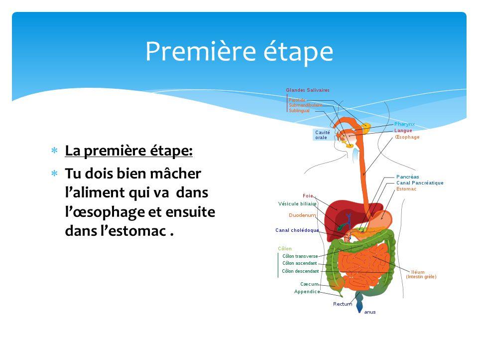  La première étape:  Tu dois bien mâcher l'aliment qui va dans l'œsophage et ensuite dans l'estomac. Première étape