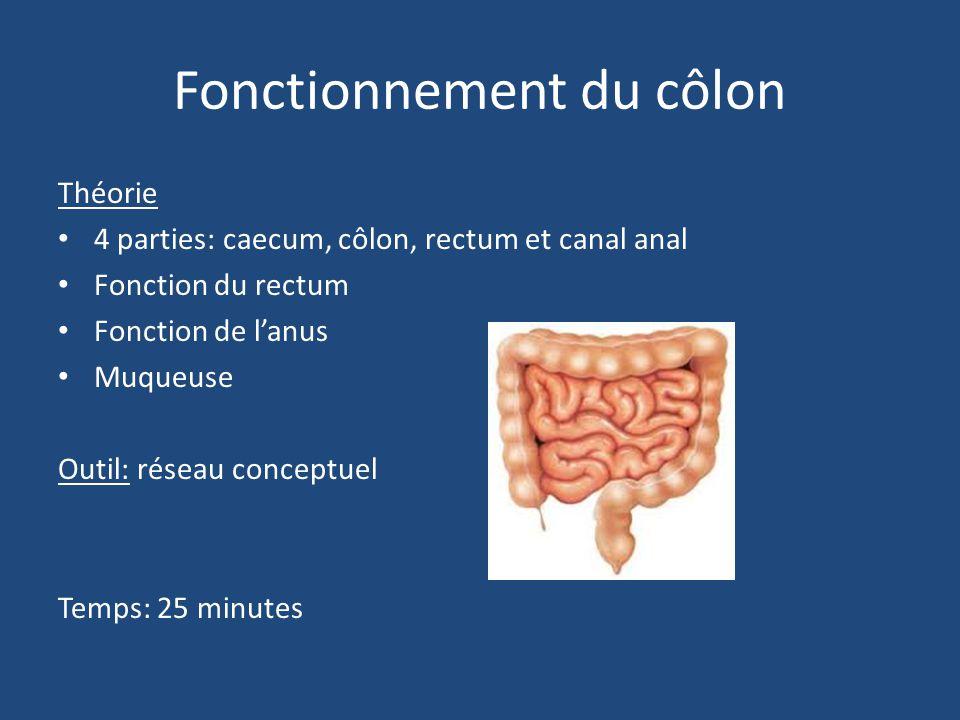 Fonctionnement du côlon Théorie 4 parties: caecum, côlon, rectum et canal anal Fonction du rectum Fonction de l'anus Muqueuse Outil: réseau conceptuel Temps: 25 minutes