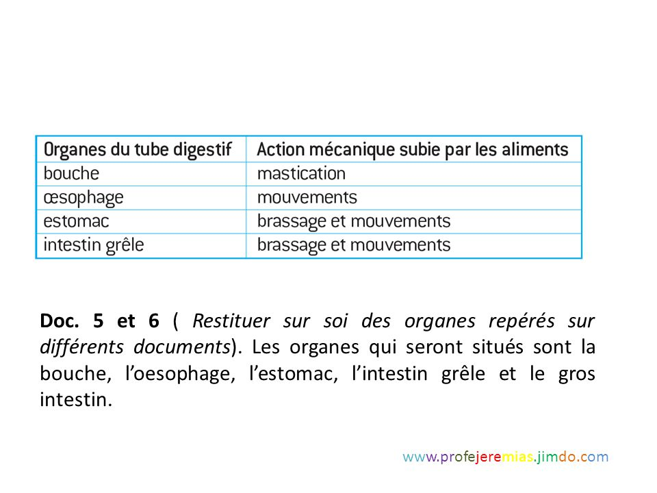Doc. 5 et 6 ( Restituer sur soi des organes repérés sur différents documents). Les organes qui seront situés sont la bouche, l'oesophage, l'estomac, l