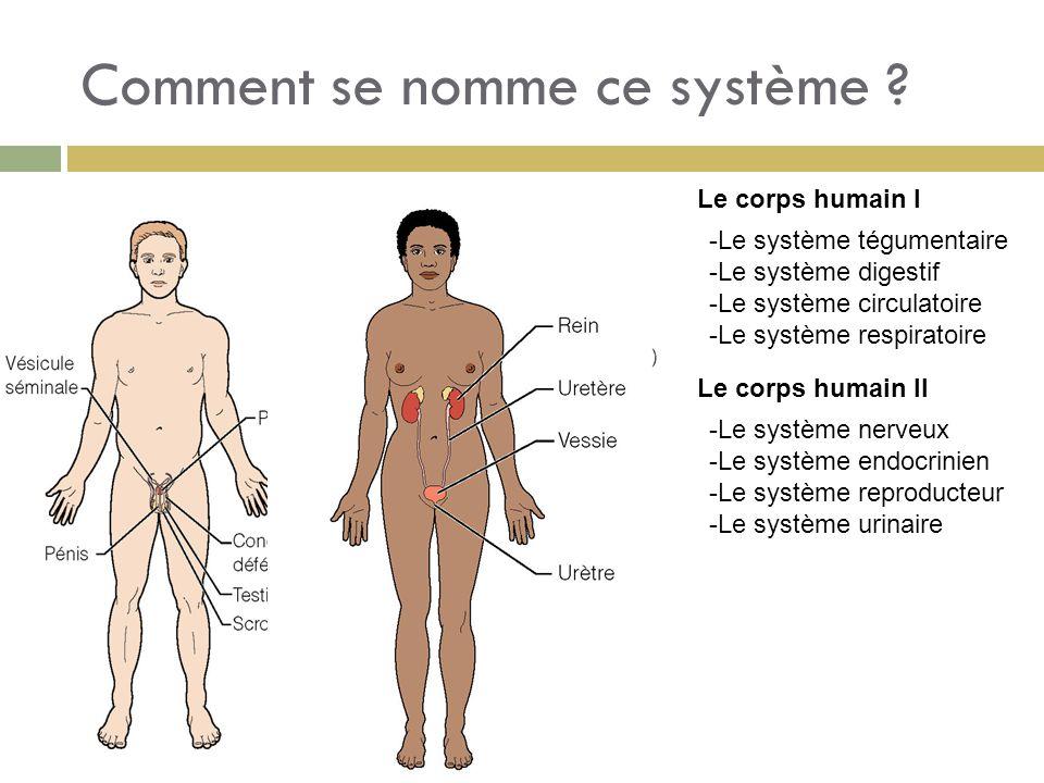 Comment se nomme ce système ? -Le système tégumentaire -Le système digestif -Le système circulatoire -Le système respiratoire Le corps humain I Le cor