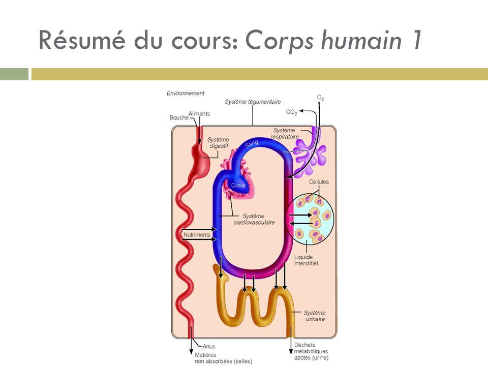 Résumé du cours: Corps humain 1