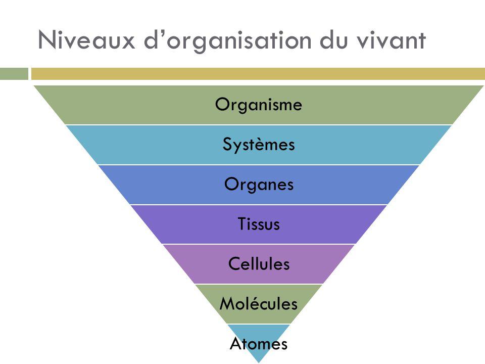 Niveaux d'organisation du vivant Organisme Systèmes Organes Tissus Cellules Molécules Atomes