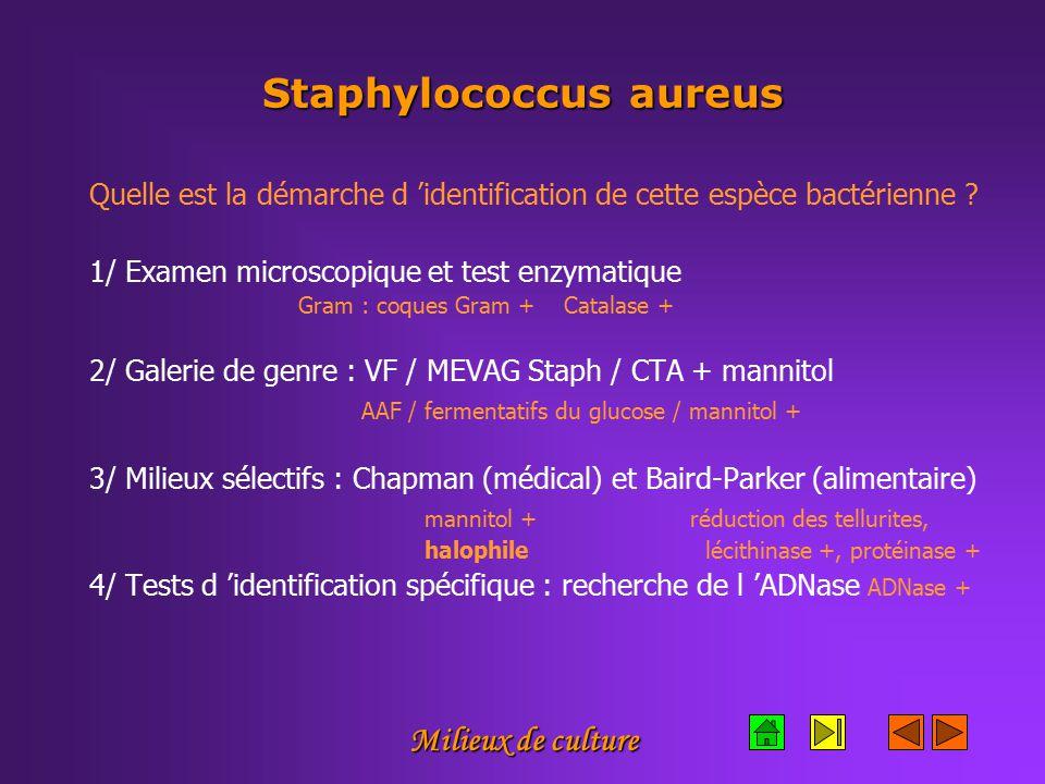 Milieux de culture Staphylococcus aureus Quelle est la démarche d 'identification de cette espèce bactérienne .