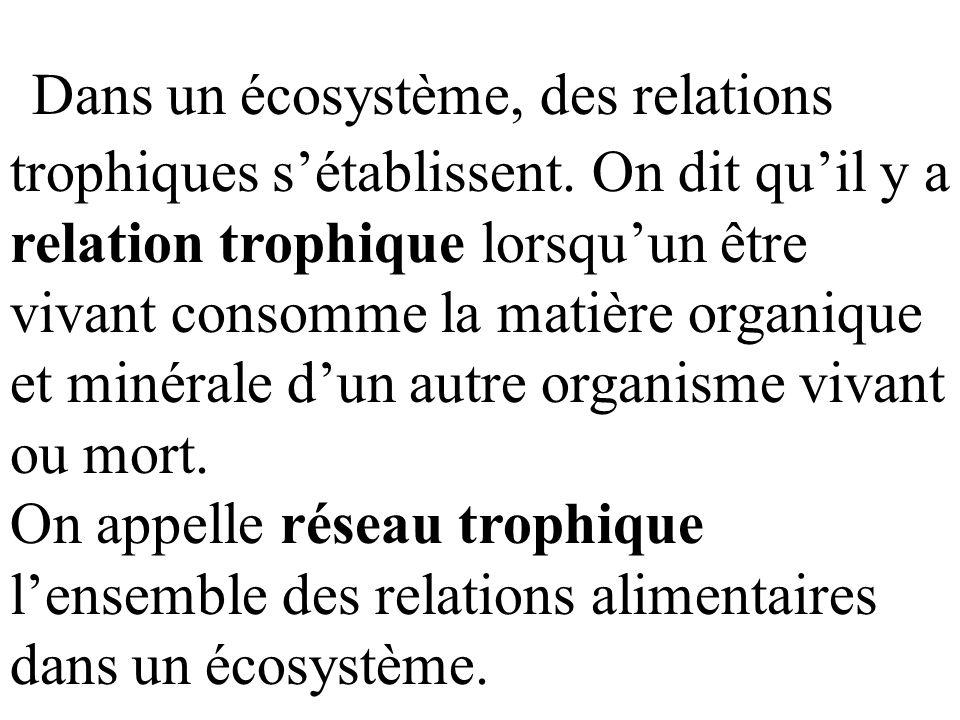 Dans un écosystème, des relations trophiques s'établissent.