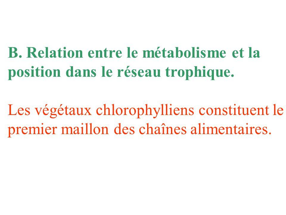 B.Relation entre le métabolisme et la position dans le réseau trophique.