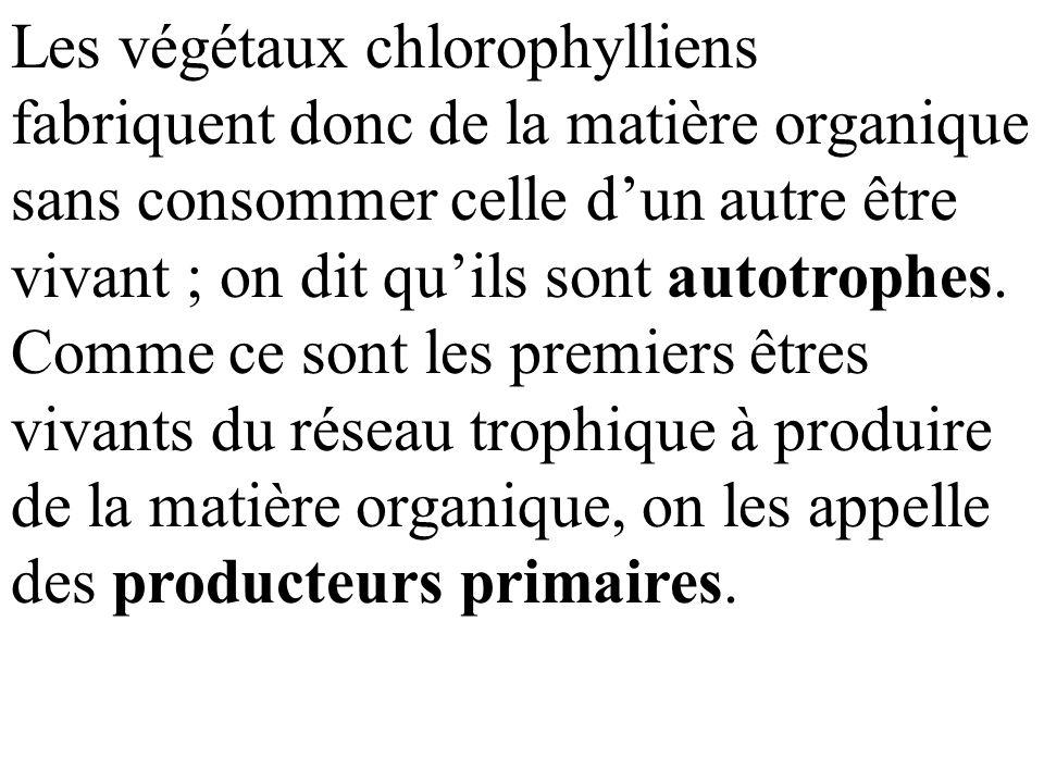 Les végétaux chlorophylliens fabriquent donc de la matière organique sans consommer celle d'un autre être vivant ; on dit qu'ils sont autotrophes.