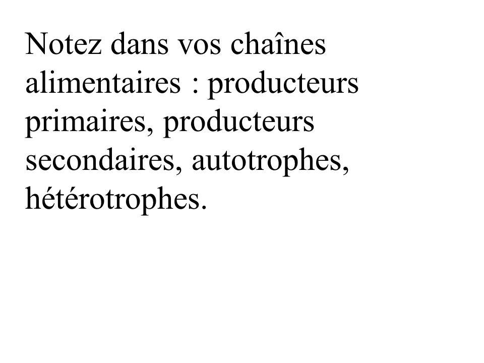 Notez dans vos chaînes alimentaires : producteurs primaires, producteurs secondaires, autotrophes, hétérotrophes.