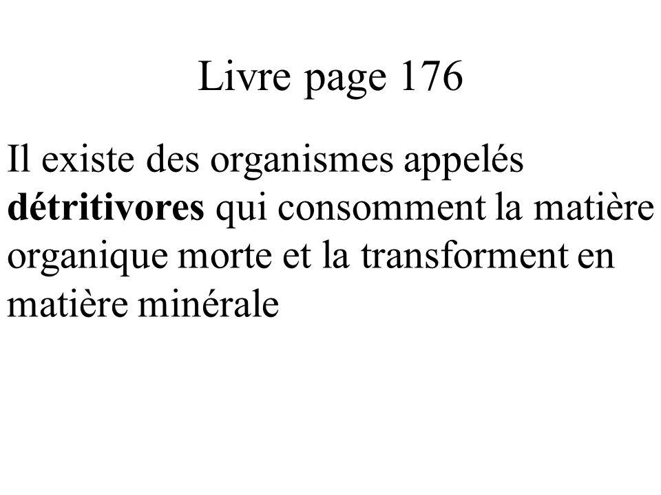 Livre page 176 Il existe des organismes appelés détritivores qui consomment la matière organique morte et la transforment en matière minérale
