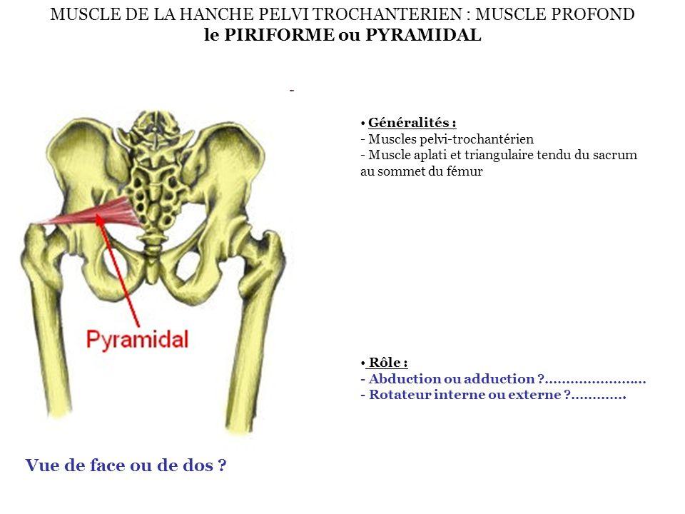 Généralités : - Muscles pelvi-trochantérien - Muscle aplati et triangulaire tendu du sacrum au sommet du fémur Rôle : - Abduction ou adduction ?………………