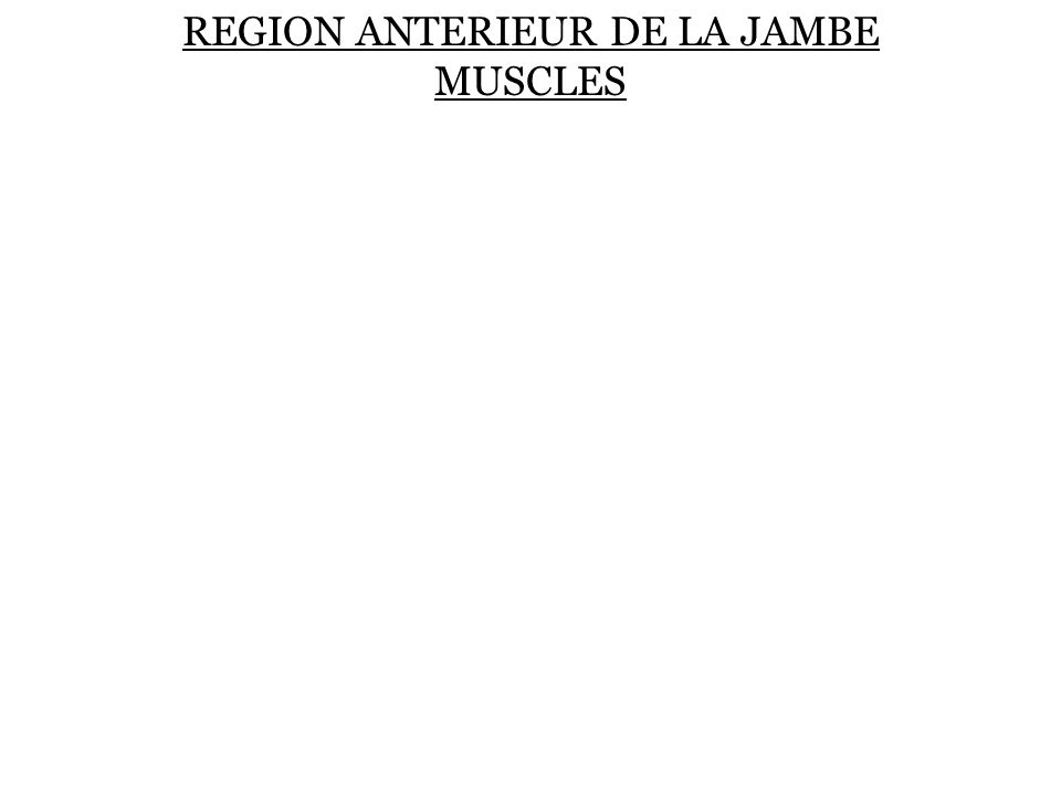 REGION ANTERIEUR DE LA JAMBE MUSCLES