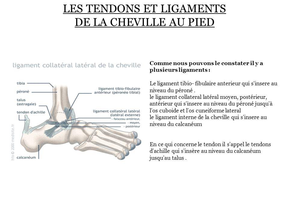 LES TENDONS ET LIGAMENTS DE LA CHEVILLE AU PIED Comme nous pouvons le constater il y a plusieurs ligaments : Le ligament tibio- fibulaire anterieur qu