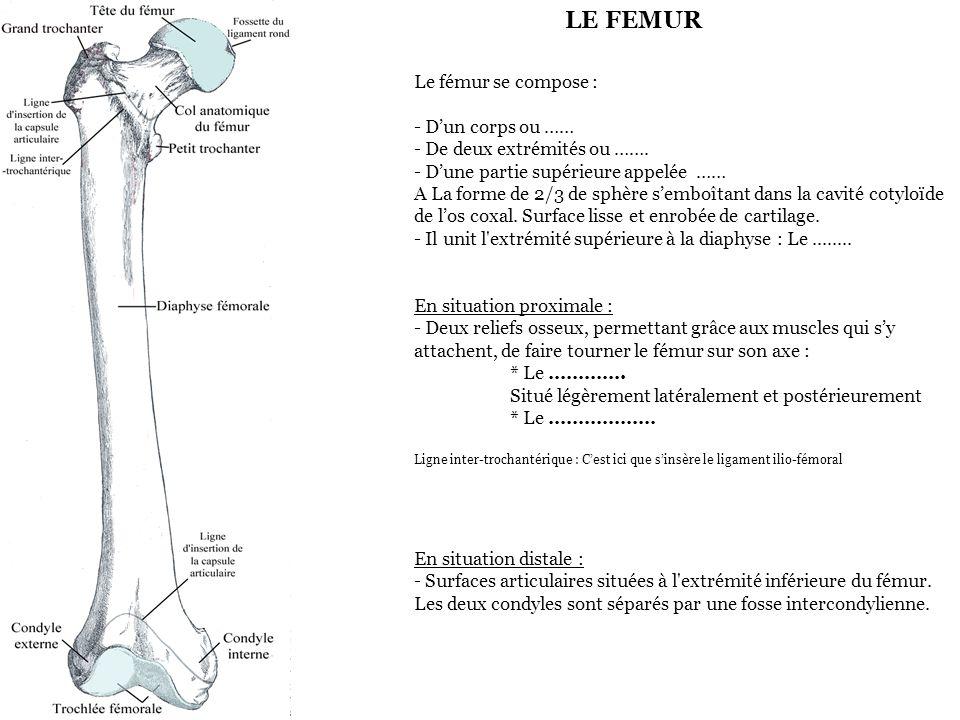 Le fémur se compose : - D'un corps ou …… - De deux extrémités ou ……. - D'une partie supérieure appelée …… A La forme de 2/3 de sphère s'emboîtant dans