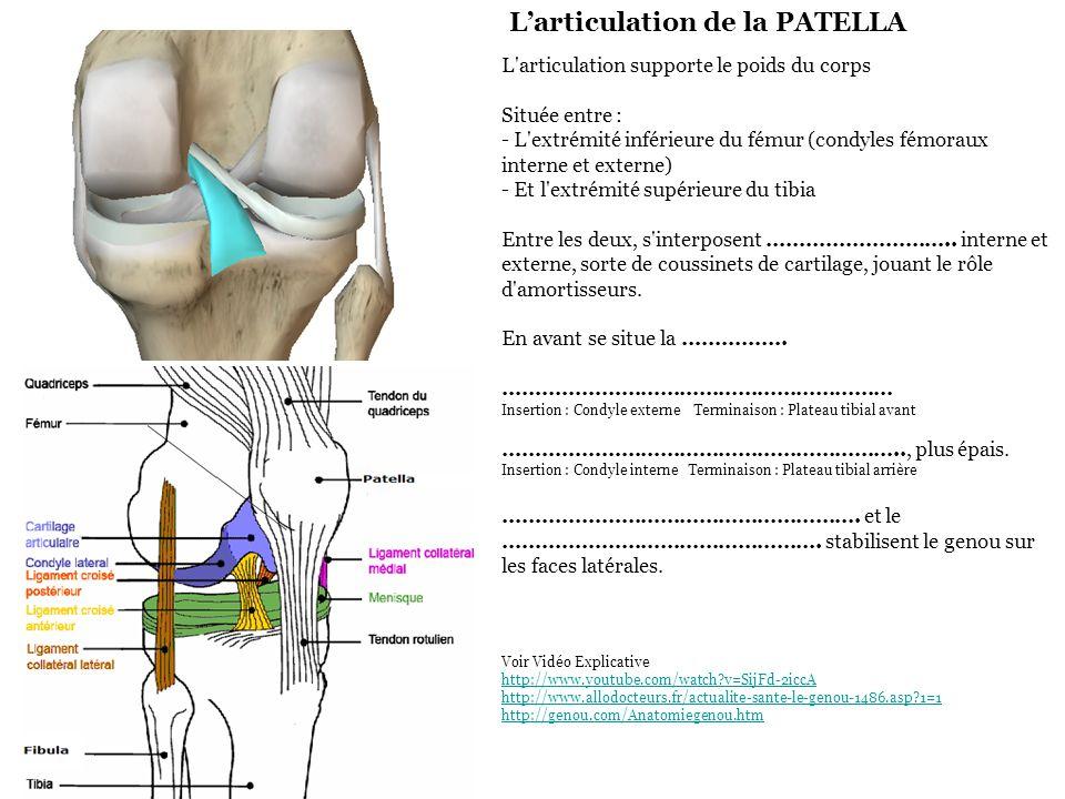 L'articulation de la PATELLA L'articulation supporte le poids du corps Située entre : - L'extrémité inférieure du fémur (condyles fémoraux interne et