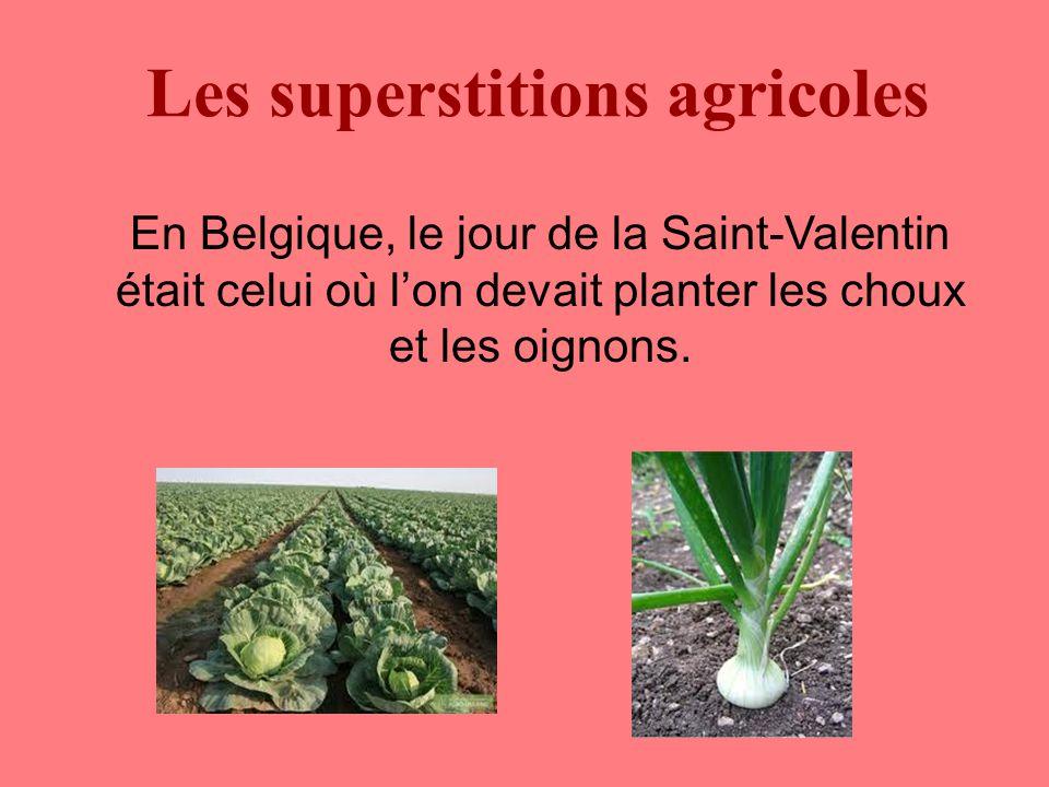 Les superstitions agricoles En Belgique, le jour de la Saint-Valentin était celui où l'on devait planter les choux et les oignons.