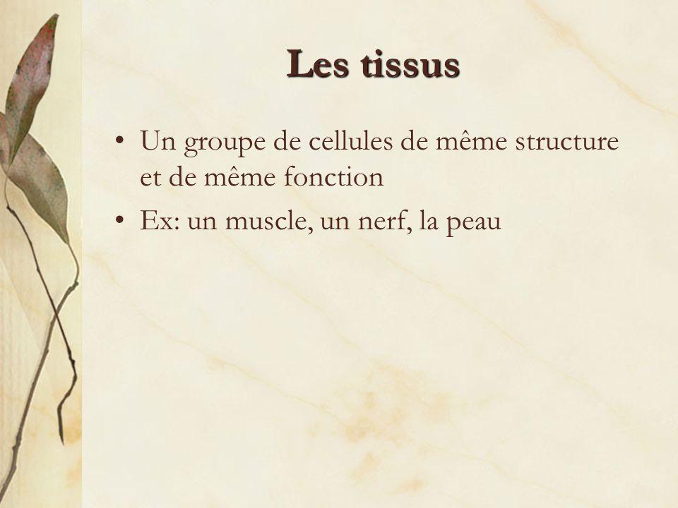 Les tissus Un groupe de cellules de même structure et de même fonction Ex: un muscle, un nerf, la peau