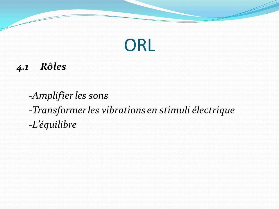 ORL 4.1 Rôles -Amplifier les sons -Transformer les vibrations en stimuli électrique -L'équilibre