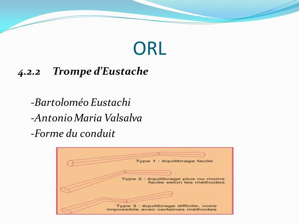 ORL 4.2.2 Trompe d'Eustache -Bartoloméo Eustachi -Antonio Maria Valsalva -Forme du conduit