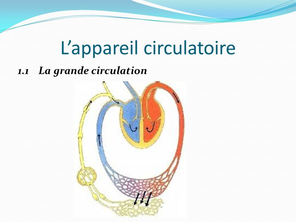 L'appareil circulatoire 1.1 La grande circulation