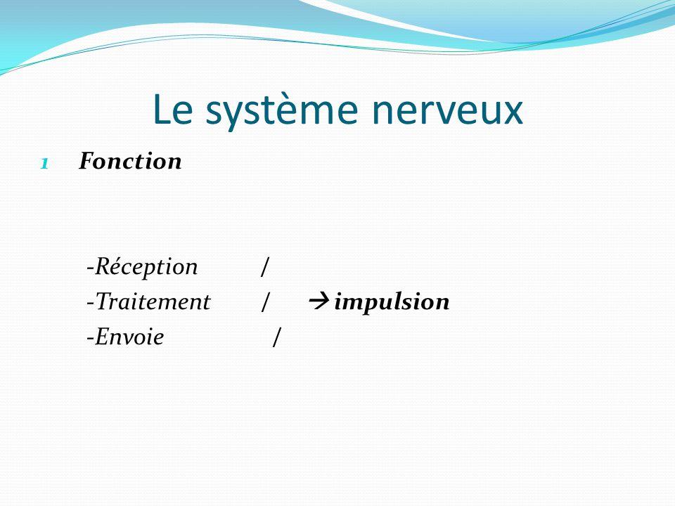 Le système nerveux 1 Fonction -Réception / -Traitement /  impulsion -Envoie /