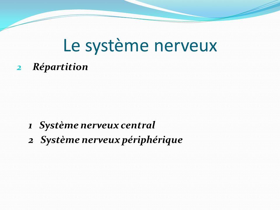 Le système nerveux 2 Répartition 1 Système nerveux central 2 Système nerveux périphérique