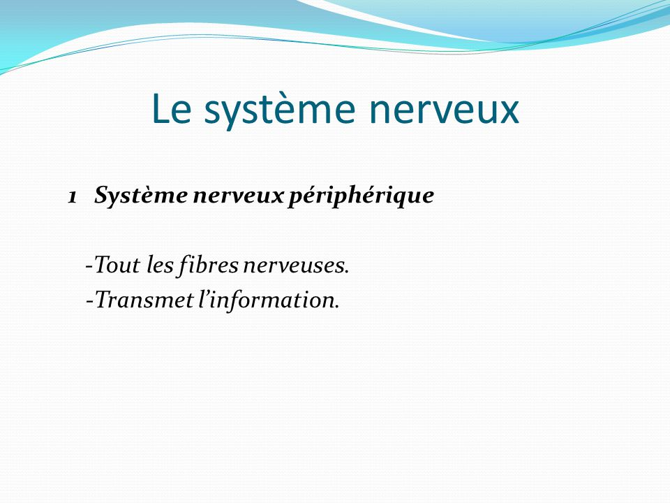 Le système nerveux 1 Système nerveux périphérique -Tout les fibres nerveuses.
