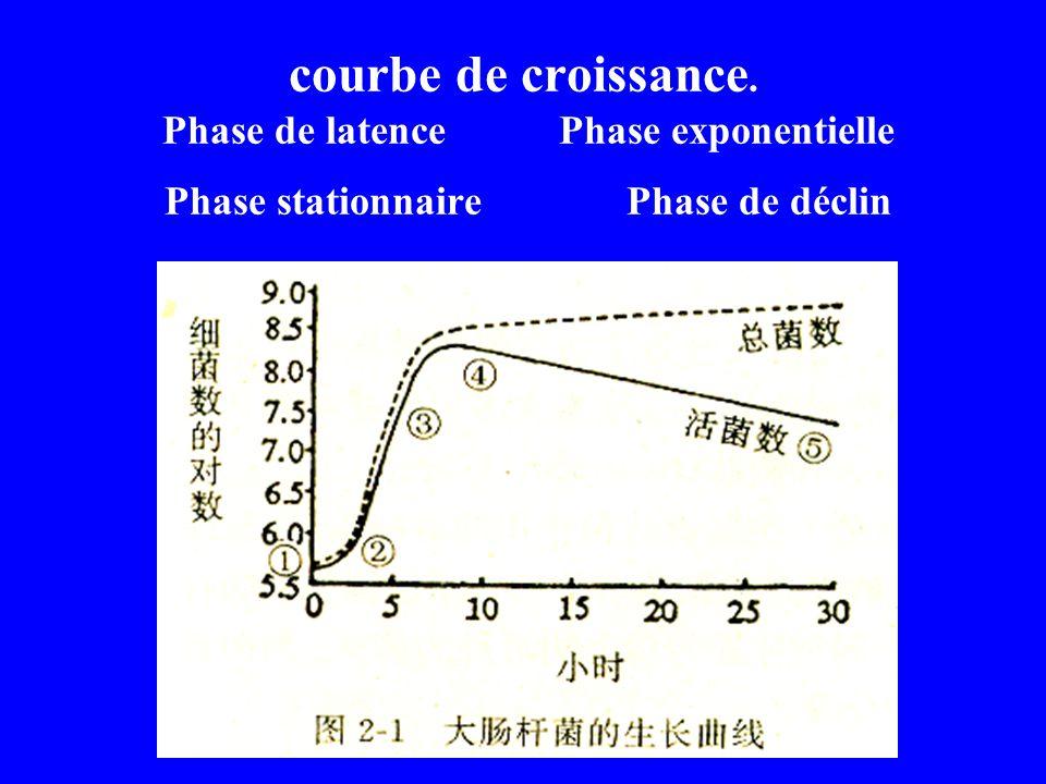 courbe de croissance. Phase de latence Phase exponentielle Phase stationnaire Phase de déclin