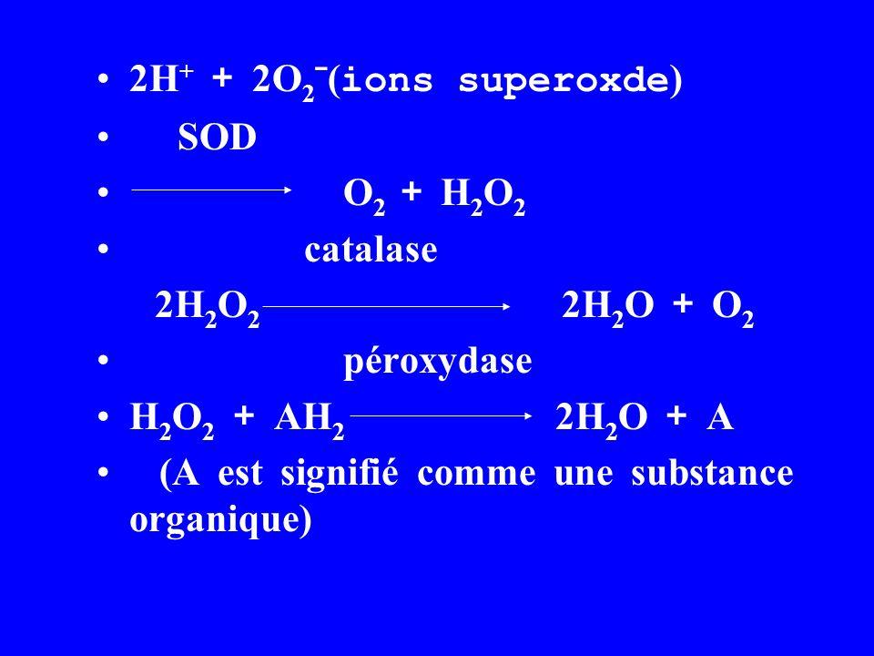 2H + + 2O 2 ˉ( ions superoxde ) SOD O 2 + H 2 O 2 catalase 2H 2 O 2 2H 2 O + O 2 péroxydase H 2 O 2 + AH 2 2H 2 O + A (A est signifié comme une substance organique)
