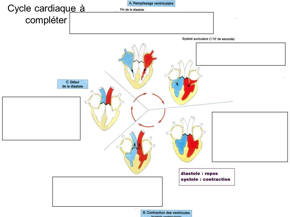 Cycle cardiaque à compléter
