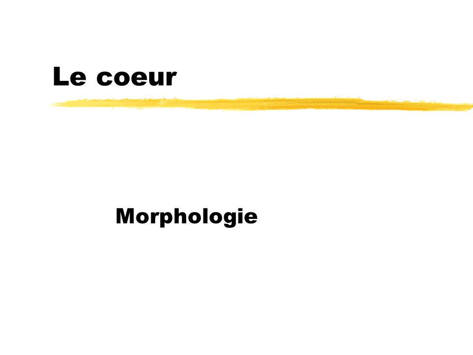 Le coeur Morphologie