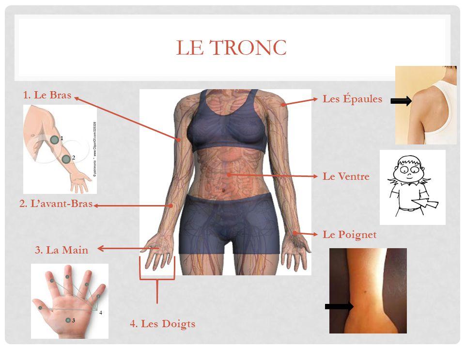 LE TRONC Les Épaules Le Ventre Le Poignet 4. Les Doigts 3. La Main 2. L'avant-Bras 1. Le Bras 1 2 3 4