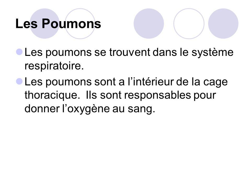 Les Poumons Les poumons se trouvent dans le système respiratoire.