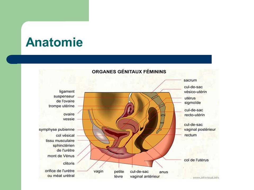 Nett Anatomie Und Phsiology Ideen - Menschliche Anatomie Bilder ...