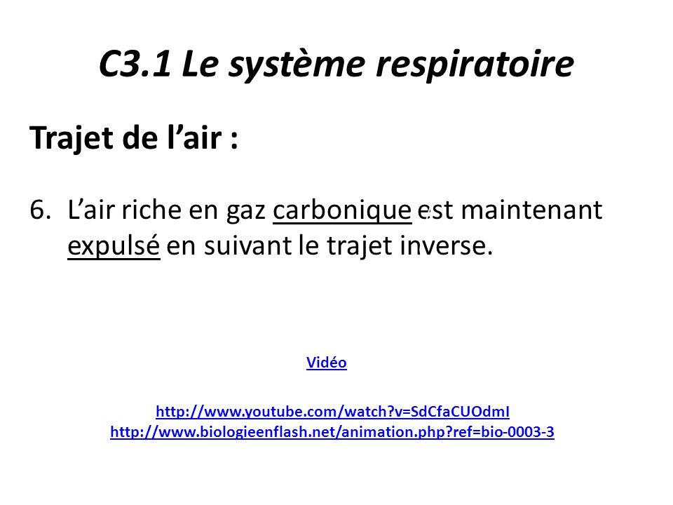 C3.1 Le système respiratoire Trajet de l'air : 6.L'air riche en gaz carbonique est maintenant expulsé en suivant le trajet inverse.