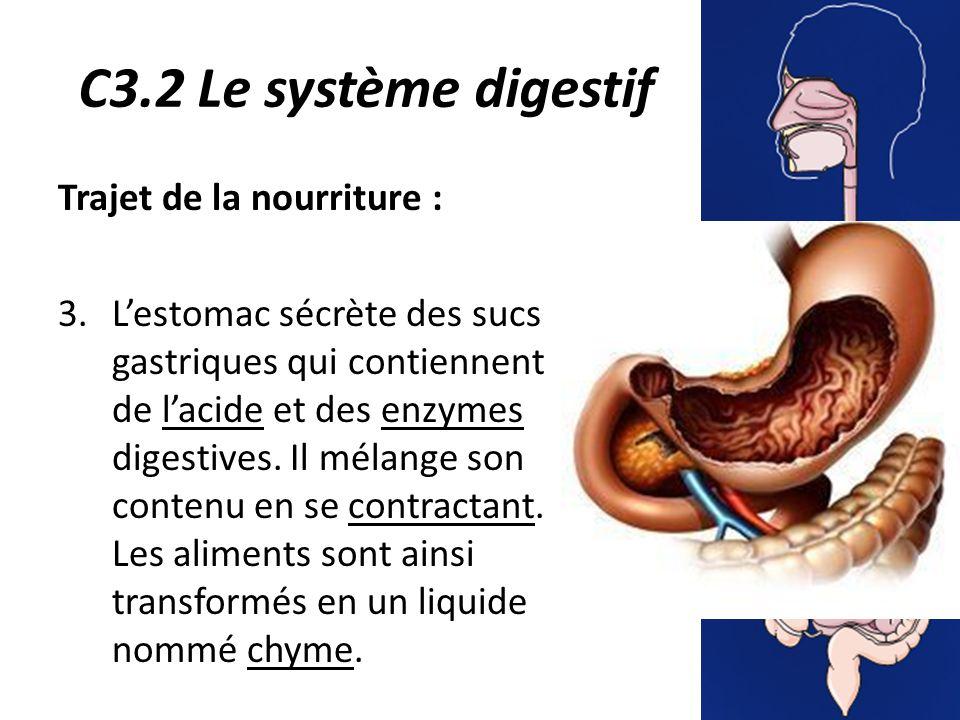 C3.2 Le système digestif Trajet de la nourriture : 3.L'estomac sécrète des sucs gastriques qui contiennent de l'acide et des enzymes digestives.