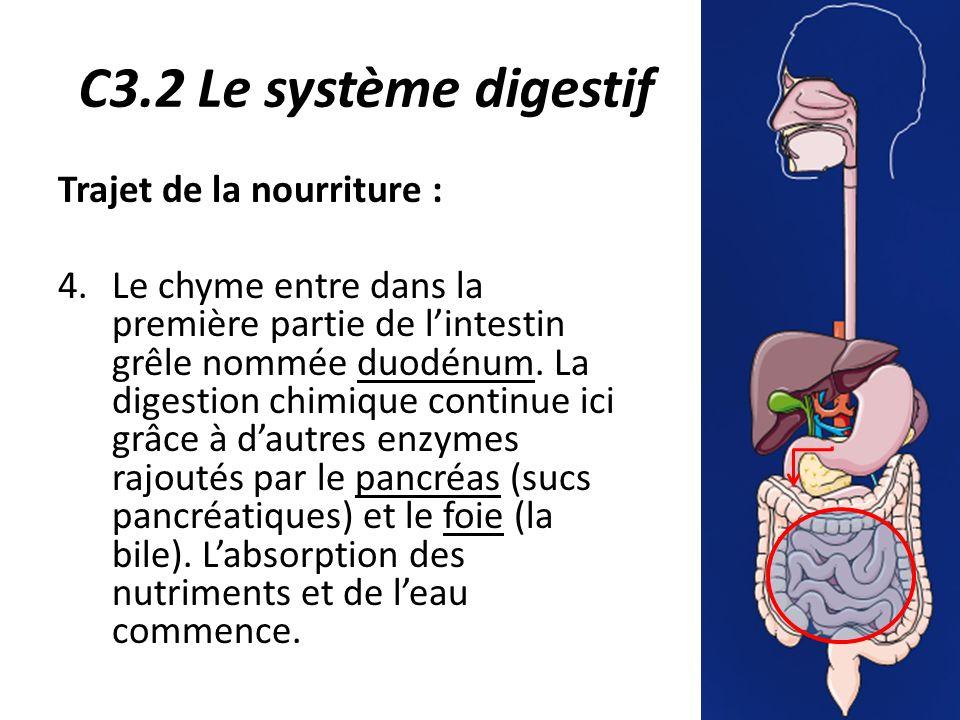 C3.2 Le système digestif Trajet de la nourriture : 4.Le chyme entre dans la première partie de l'intestin grêle nommée duodénum.