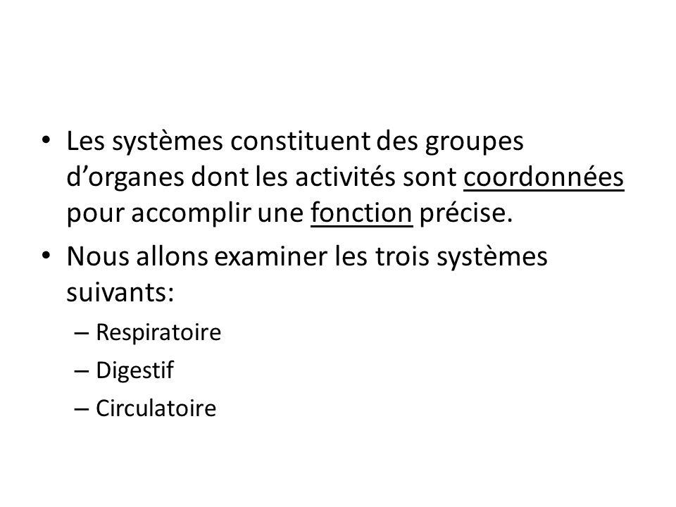 Les systèmes constituent des groupes d'organes dont les activités sont coordonnées pour accomplir une fonction précise.