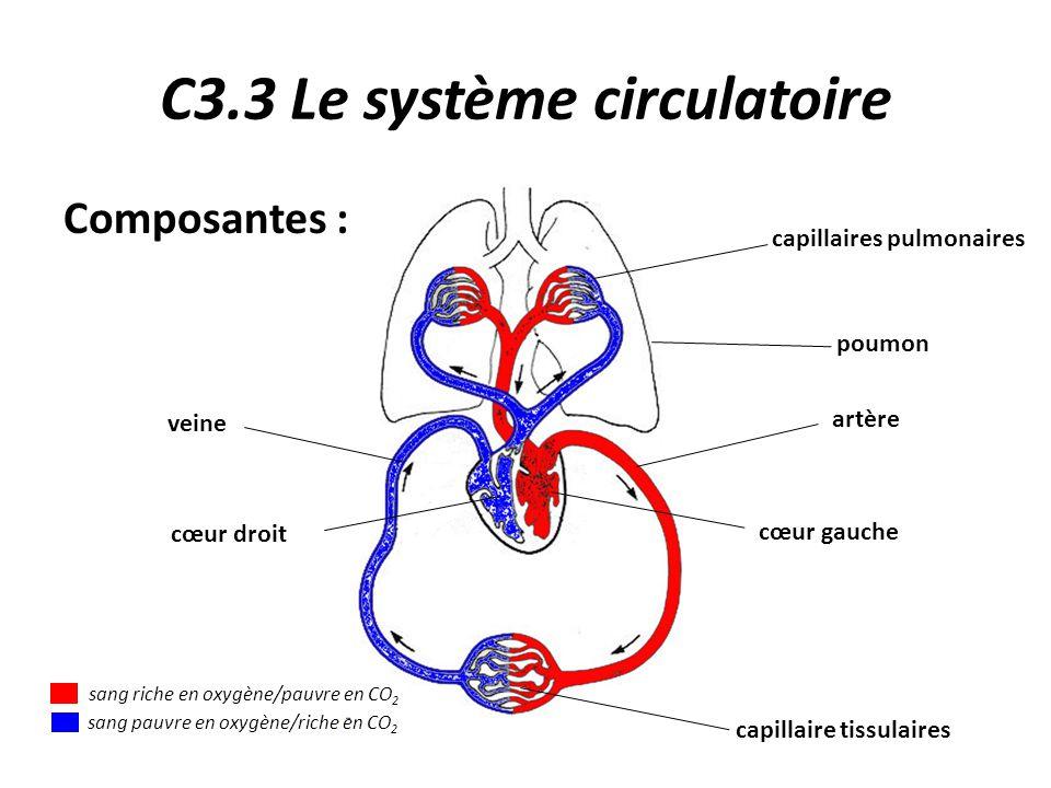 C3.3 Le système circulatoire capillaires pulmonaires poumon artère cœur gauche cœur droit veine capillaire tissulaires Composantes : sang riche en oxygène/pauvre en CO 2 sang pauvre en oxygène/riche en CO 2